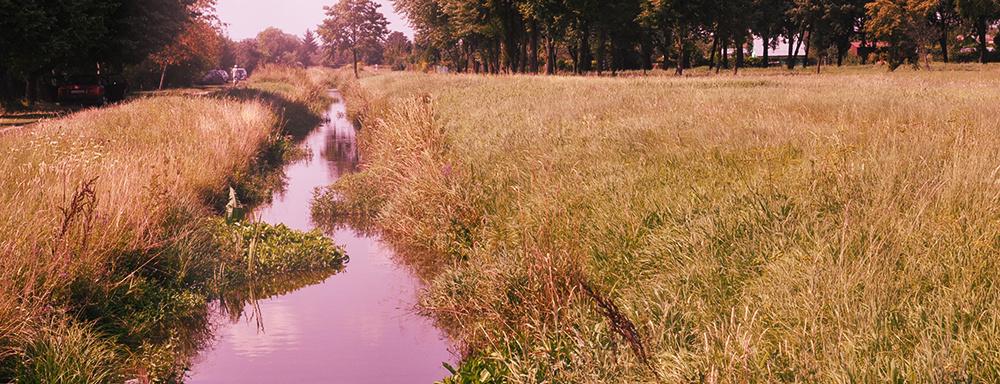 Rzeka Krzna.