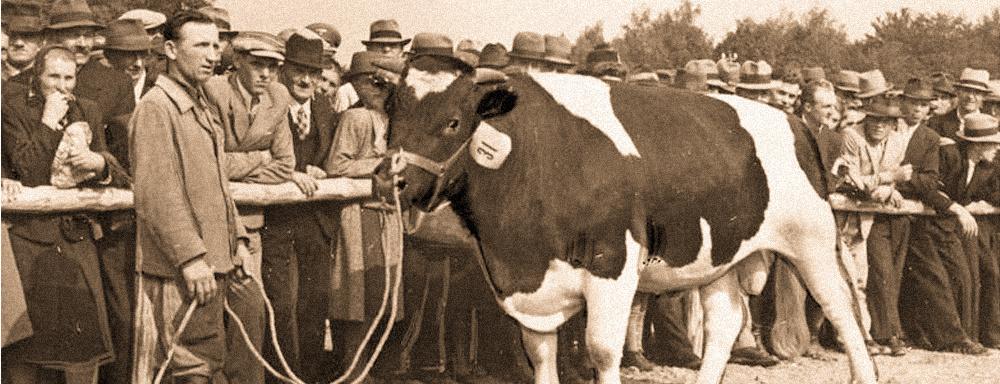 Fragment fotografii z wystawy rolniczej w Dębicy - 1943 r. Fotograf: Otto Rosner