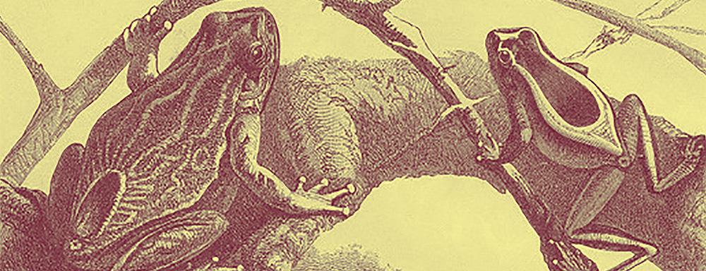 Rycina - płazy, żaby, ropuchy - około 1890 r.
